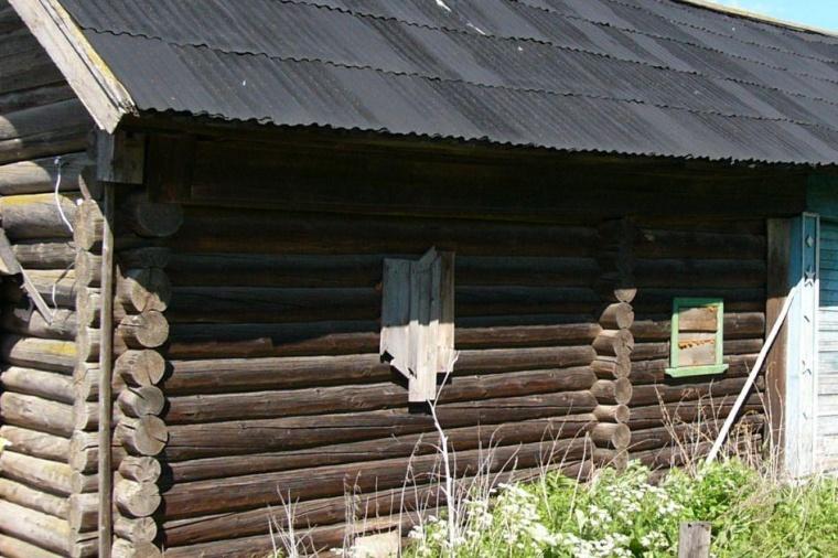 Жуки ленинградской области фото и название женщина